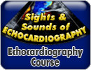 6th Annual Sights and Sounds of Echocardiography